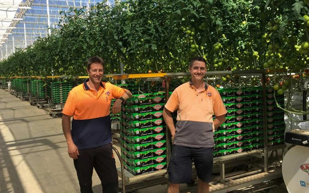 Australian marketing success supported by Dutch cultivation know-how
