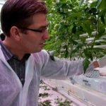 Steering with high EC improves taste and quality of fruits