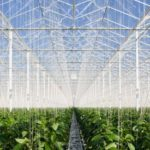 BOM Group is building 18 hectares of greenhouses for 4Evergreen
