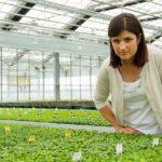 Chrysanthemum beer and striking presentation make pot mums hip