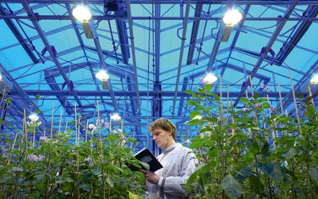 Patent on plant characteristics not without consequences
