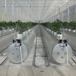 Fruit juice producer Haisheng, a Chinese company with more than 2,000 employees, recently ordered an Ultra Clima greenhouse from Kubo.