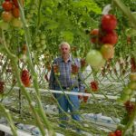'Open crop can bring forward production and save energy'