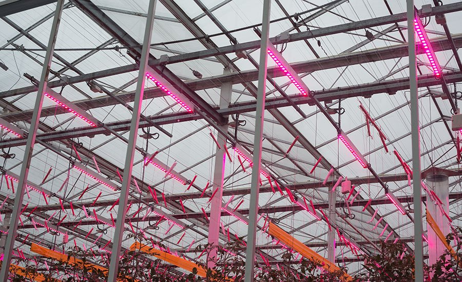 LEDs for energy savings of 50%