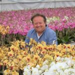 Phalaenopsis grower opens the batting with certified organic production