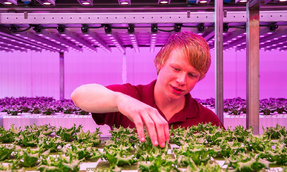 The cultivation of crops in the city, or Urban Farming, is beginning to arouse increasing interest worldwide.