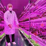 Electronics manufacturers in Japan launched a number of Vertical Farming projects with the aim of producing good LEDs and electronics for control equipment.