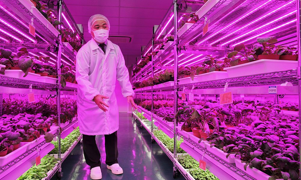 Electronics manufacturers express growing interest in commercial farming