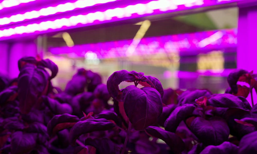 Interest in vertical farming (VF) is growing worldwide but the standard greenhouse still has plenty of room for development, according to Jasper den Besten.