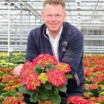 Locations in Portugal and Uganda give hydrangea grower desired flexibility