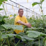 High-wire cucumber grower Hans Houben is heading ever further down the path of Next Generation Growing.