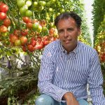 tomato growers Verkade in 's-Gravenzande gained their first experience with a hybrid system consisting of SON-T HPS lights and LEDs