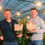 Influenced by the high cost of electricity, subsidies and the ageing of their previous systems, two Belgian nurseries installed hybrid top lighting.
