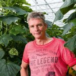 Marco Zuidgeest from Delfgauw grows the small core cucumber specially for the British food processing company Greencore.