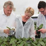 A range of new coated fertilisers is enabling growers of pot plants, bedding plants and soil-grown cut flowers to optimise fertilisation