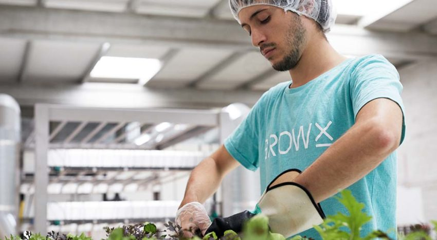 GrowX vertical farm in Amsterdam