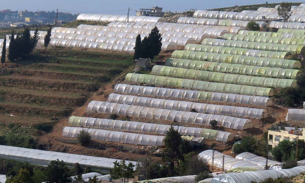 Lebanese greenhouses