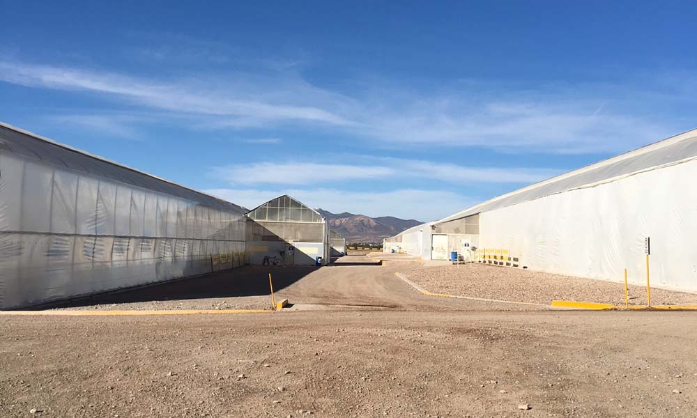 vegetable production company Agrícola Zarattini grows peppers, tomatoes, broccoli, asparagus and strawberries, predominantly for export markets.