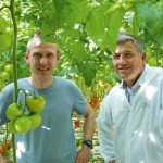 A tomato grower is the first to gain experience with an anti-condensation coating for glass.