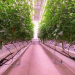 Certhon Innovation Centre for daylight-less cultivation