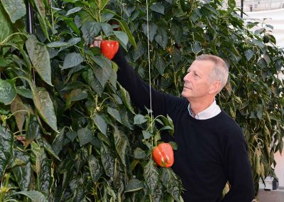 "Wim Voogt: ""We haven't seen any negative impacts of high sodium concentrations in sweet pepper."""