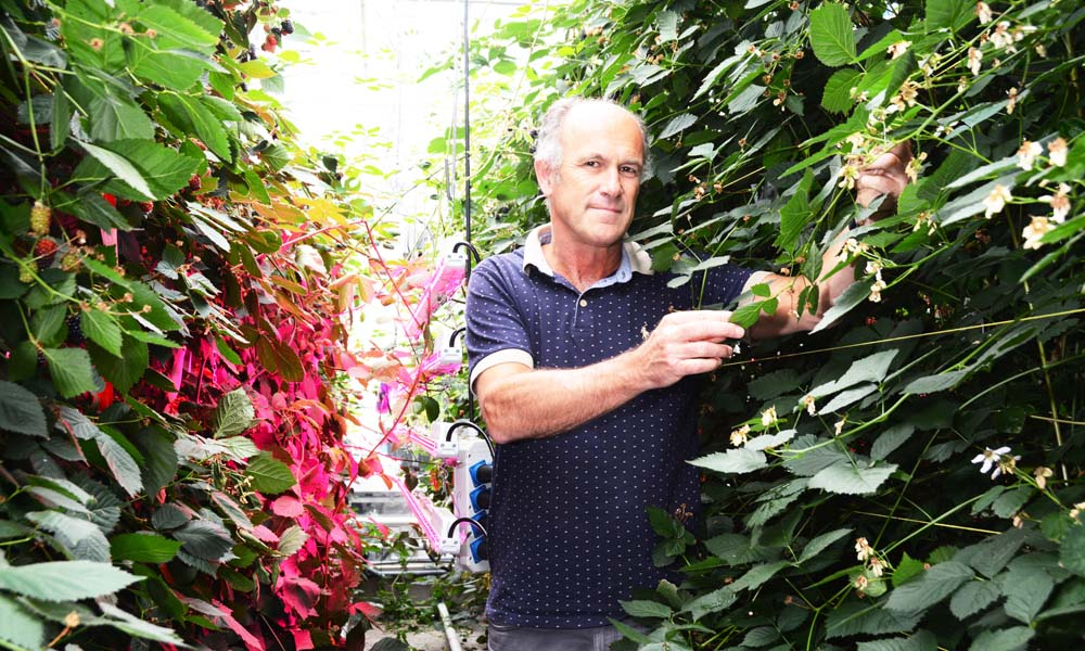 "Researchers ""grow"" model of ideal plant in simulated greenhouse"