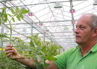 Tomato grower Geert Koot from Dutch tomato nursery Gebroeders Koot