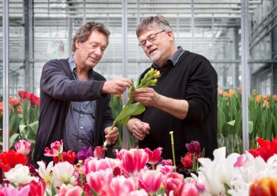 Tulip forcers can reduce transpiration without affecting quality