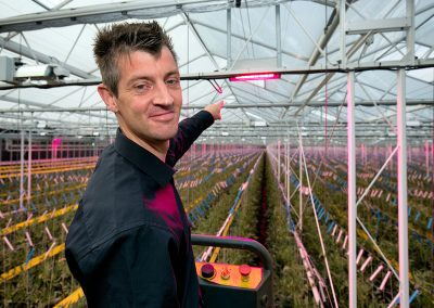 'Hybrid lighting guarantees high-quality tomatoes all year round'